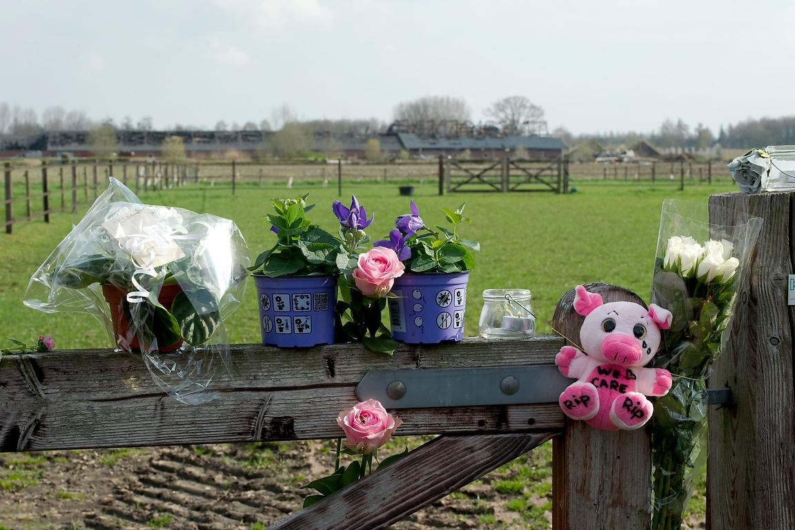 Wake voor omgekomen varkens in stalbrand | Wake for killed pigs during barn fire