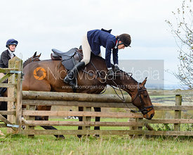 Ida Thore jumping a hunt jump at Stone Lodge. The Cottesmore Hunt at Tilton