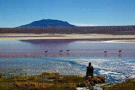 Tourists watching flamingos in Laguna Colorada and Cerro Pabellon Chico, Eduardo Avaroa Andean Fauna National Reserve, Bolivia