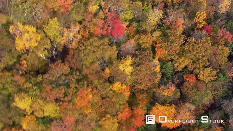 High orbit above forest in fall colors