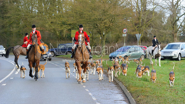 The hounds arrive at the meet - The Belvoir Hunt at Waltham House 14/1