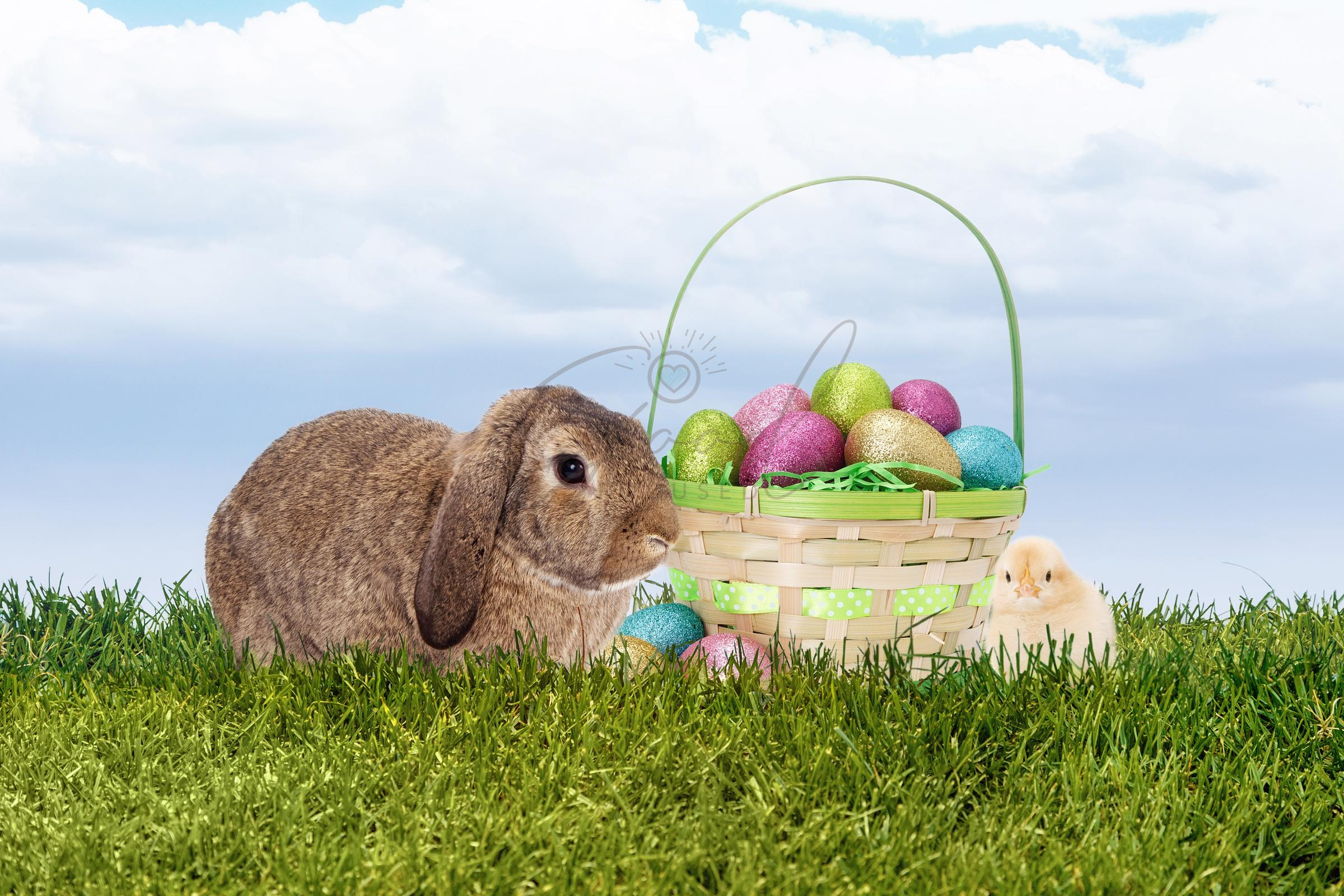 Easter Bunny With Basket and Chick