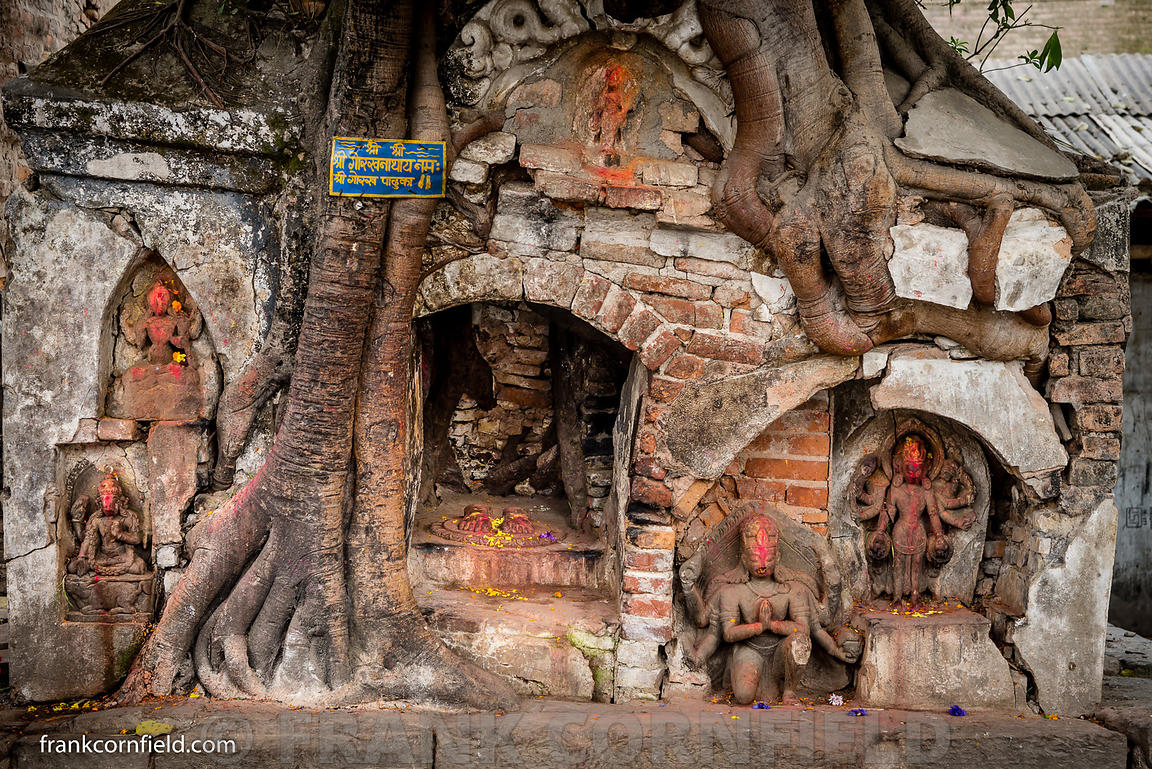 Tree root temple
