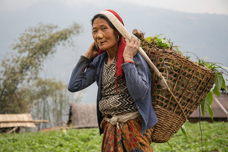 Portrait of Rash Maya Limboo (67) Carrying a Basketload of Fodder