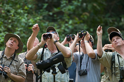 Forest birding in Subic Luzon Philippines