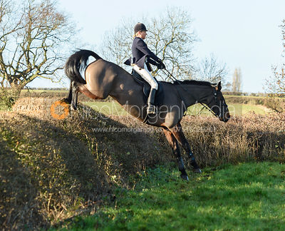 Nicky Hanbury Jumping a big drop hedge.The Quorn at Barrowcliffe