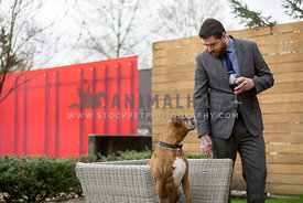 brindle boxer dog sittin on outdoor wicker chair looking at man with beard wearing suit holding glass of red wine
