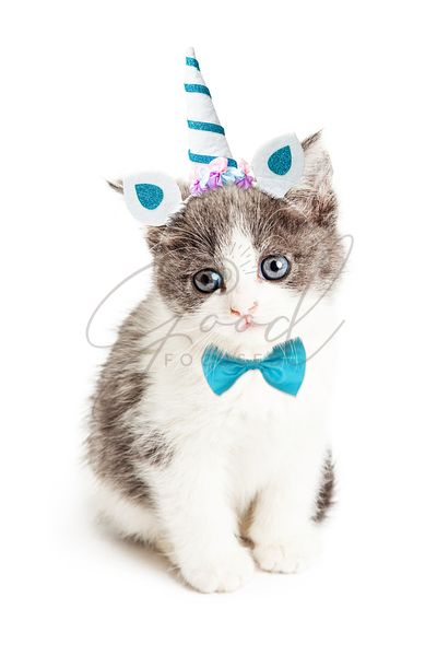 Cute Kitten Wearing Unicorn Halloween Costume
