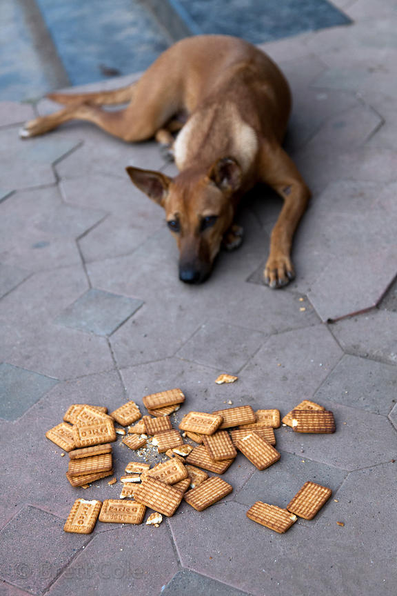 A stray dog eats crackers given it to it by a shopkeeper, Crawford Market, Mumbai, India.