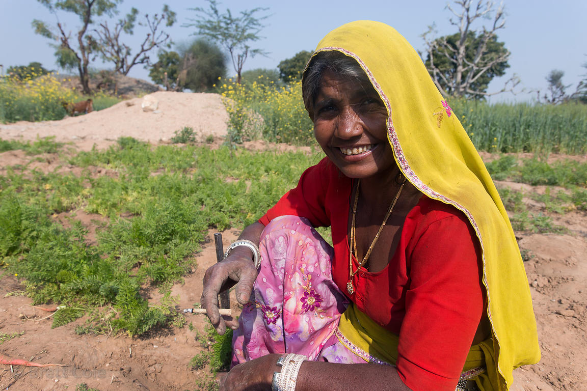 Poor but happy carrot farmers tend to their meager field near Kotaj village, Rajasthan, India