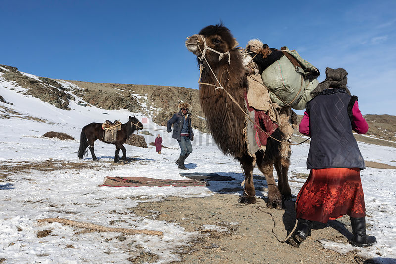 Bekysh's Wife and Son Load a Camel