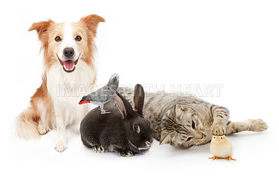 Group of Domestic Household Pets