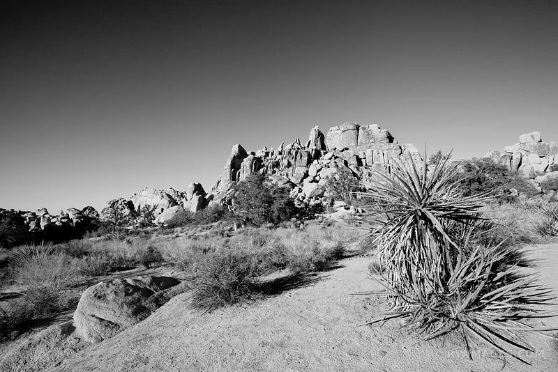 HIDDEN VALLEY JOSHUA TREE NATIONAL PARK CALIFORNIA BLACK AND WHITE