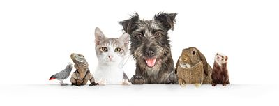 Domestic Pets Hanging Over White Website Banner
