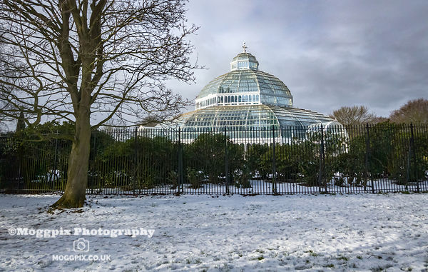 Winter at the Palm House
