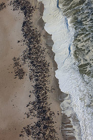 Aerial view of South African / Cape Fur Seal (Arctocephalus pusillus) colony, Cape Cross, Namibia December 2008