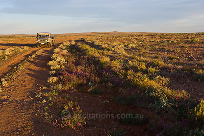 Outback track, Western NSW, Australia.