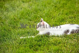 cat laying outdoors in grass