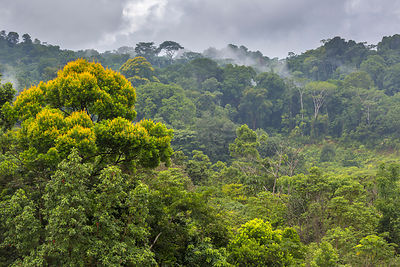 Lowland rainforest, Osa Peninsula, Costa Rica.