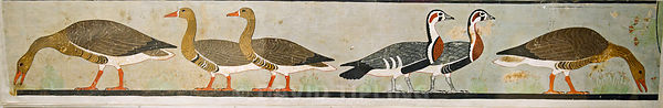 "The ""Meidum geese,"" (Red-breasted, Bean and White-fronted Geese)  from the Tomb of Nefermaat and Atet, Old Kingdom, c.2620 BC..."