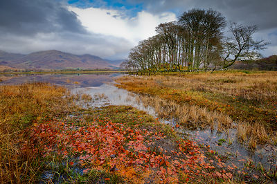 Autumn leaves, Loch Awe