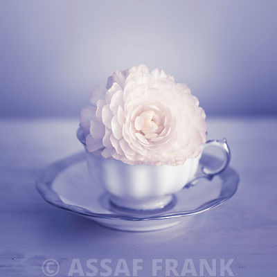 Teacups with Ranunculus flowers