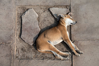 Stray dog sleeping near Assi Ghat, Varanasi, India.