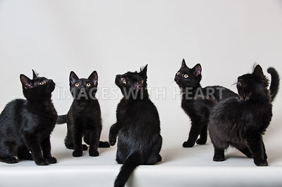 5 black teen kittens