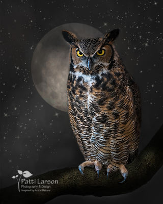 Great Horned Owl in the Moonlight