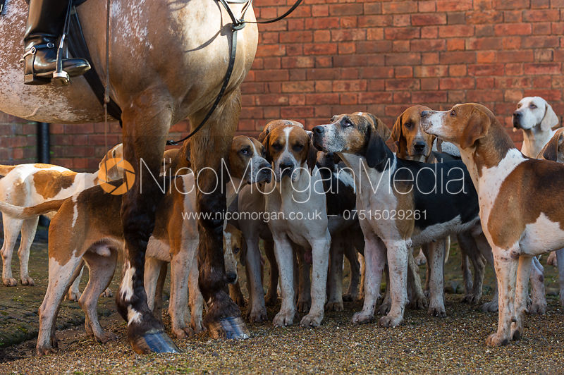 Atherstone Old English hounds