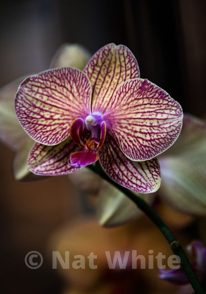 Orchid-9761_October_07_2018_NAT_WHITE