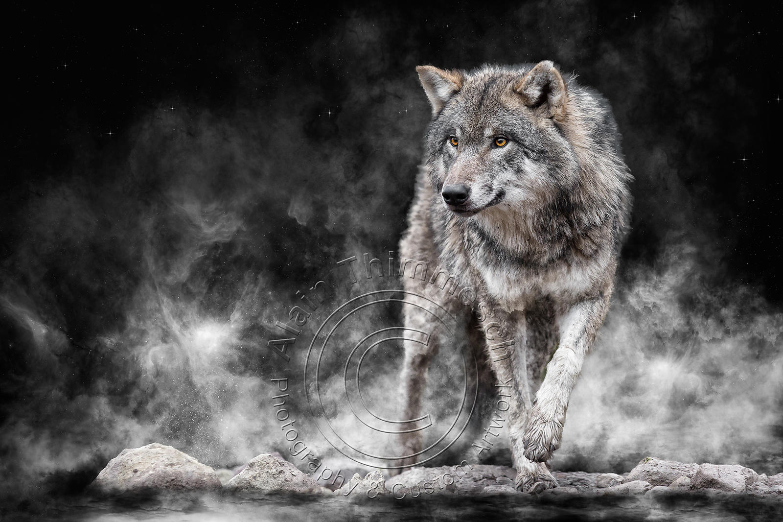 Art-Digital-Alain-Thimmesch-Loup-27