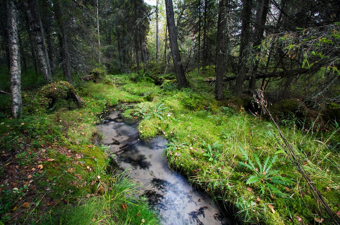 Stream from the Hallalähde Spring