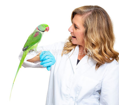 Veterinarian Holding Pet Bird