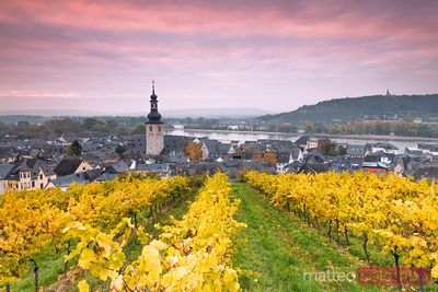 Church and vineyards of Rudesheim, Rhine valley, Hesse, Germany