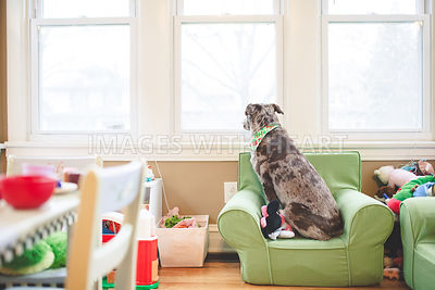 Dog_sitting_looking_out_window