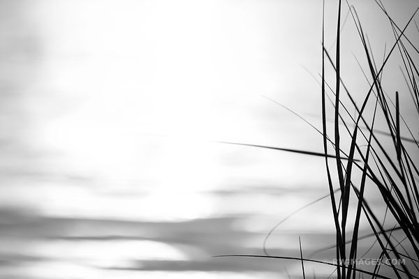 NATURE ABSTRACT BEACH GRASSES ROCK HARBOR ORLEANS CAPE COD BLACK AND WHITE