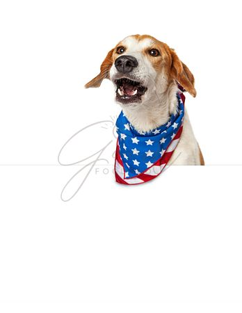 Talking American Patriotic Dog With Banner