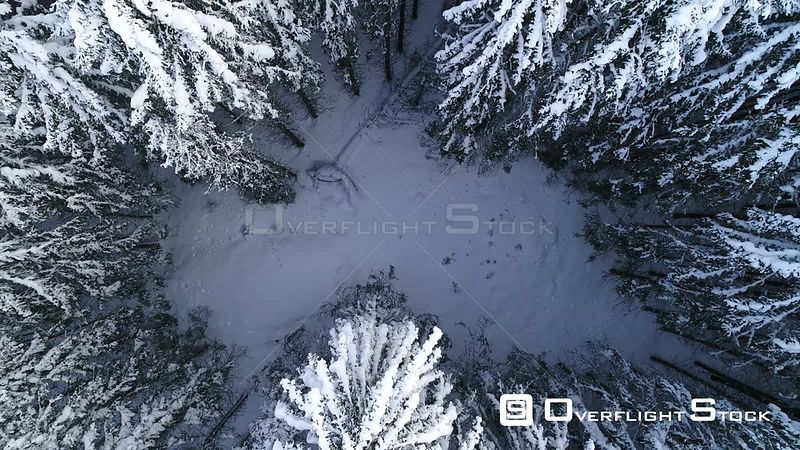 Aerial shot ascending from a coniferous forest in snow, Akershus, Norway, January 2018.