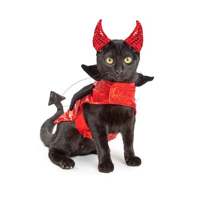 Black Cat in Halloween Devil Costume