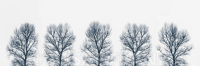 Trees in a row