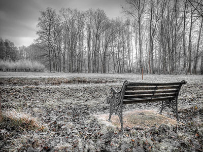 Bench at park on a forsty day
