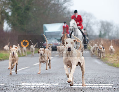 Cottesmore Steptoe, Huntsman Neil Coleman, Whip Joe Tesseyman and the Cottesmore Hounds