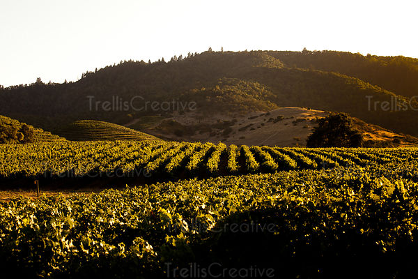 Napa Valley Wine Country Photos