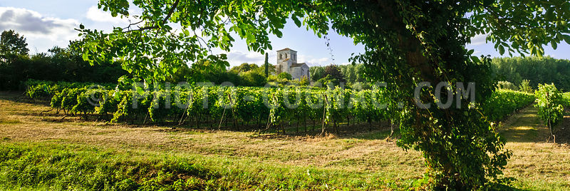 Vignoble Graves-Saint-Amant