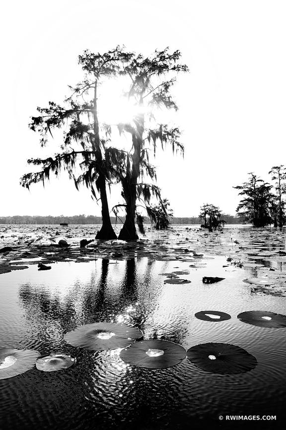 LAKE MARTIN LOUISIANA SWAMP BLACK AND WHITE VERTICAL