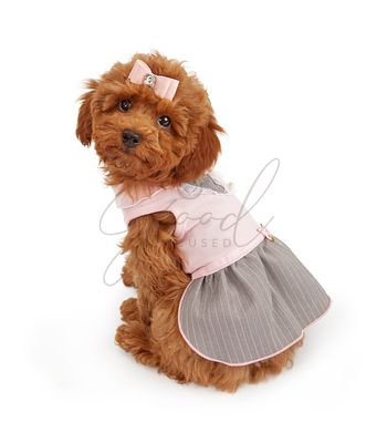 Poodle Puppy in Pink Dress