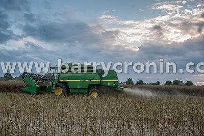 18th August, 2015.Beanie McKeown from Leggagh, Castletown, County Meath making good use of fading light as he harvests rapese...
