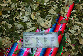 Leaflet listing vitamins found in coca leaves at trade fair promoting coca leaf products , La Paz , Bolivia