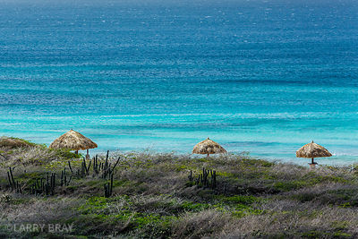 View of cactus and straw sun umbrellas next to the ocean in Aruba, Caribbean